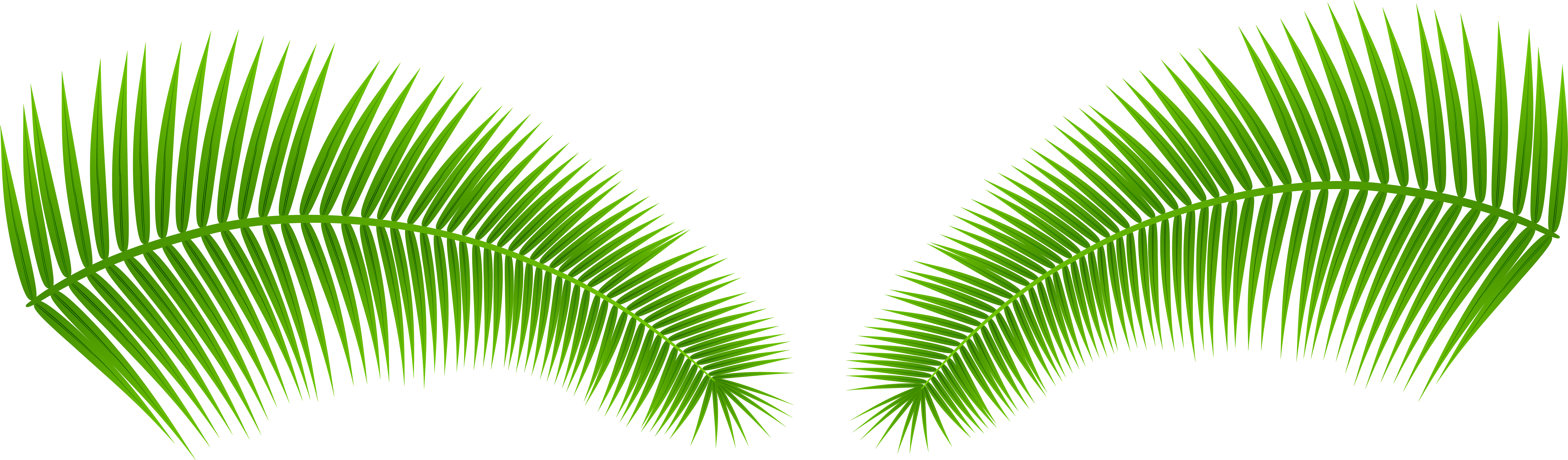 Download hd leaves clip. Palm leaf transparent png image free download