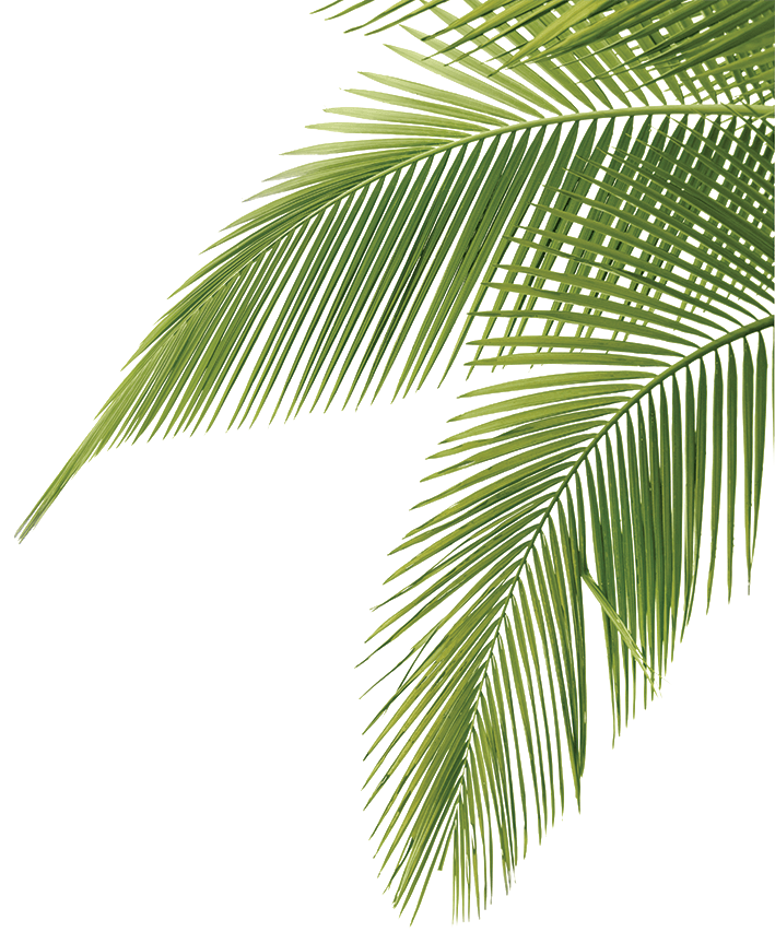Palm border png. Tree leaves illustration art