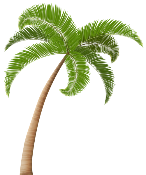 Palm tree from above png. Clip art transparent image
