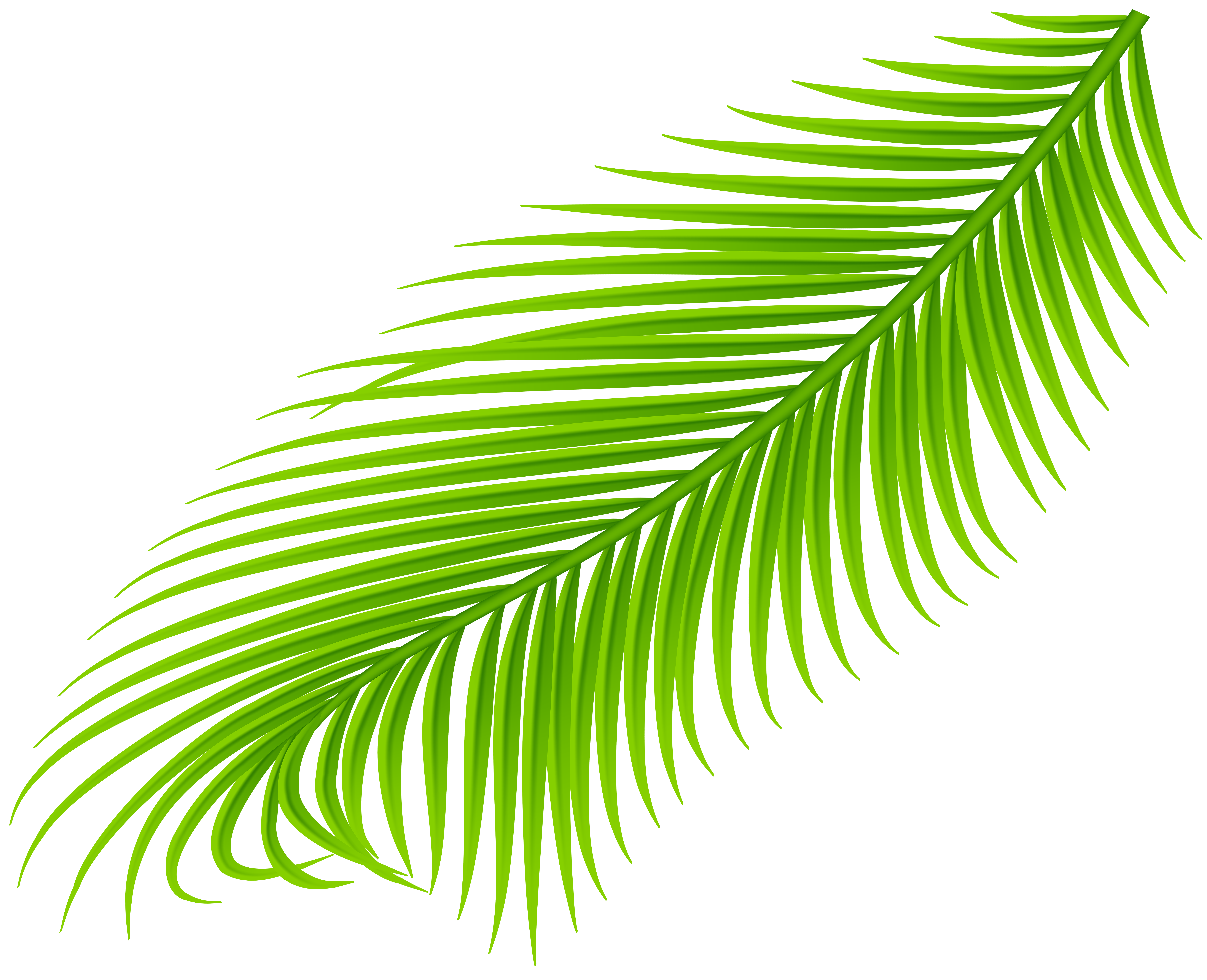 Palm branch png. Transparent clip art gallery