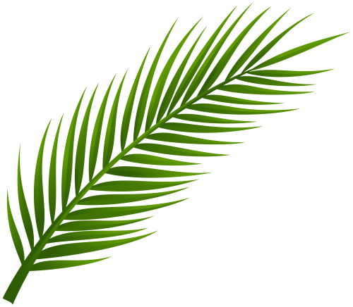Hoja vector png. Palm tree leaf clip vector stock