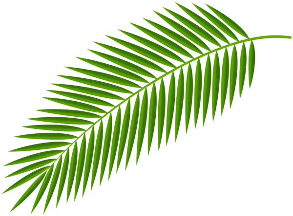 Palm branches png. Gallery decorative elements