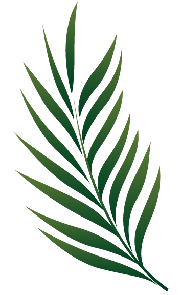 Palm branches png. E cosplay pinterest tattoo