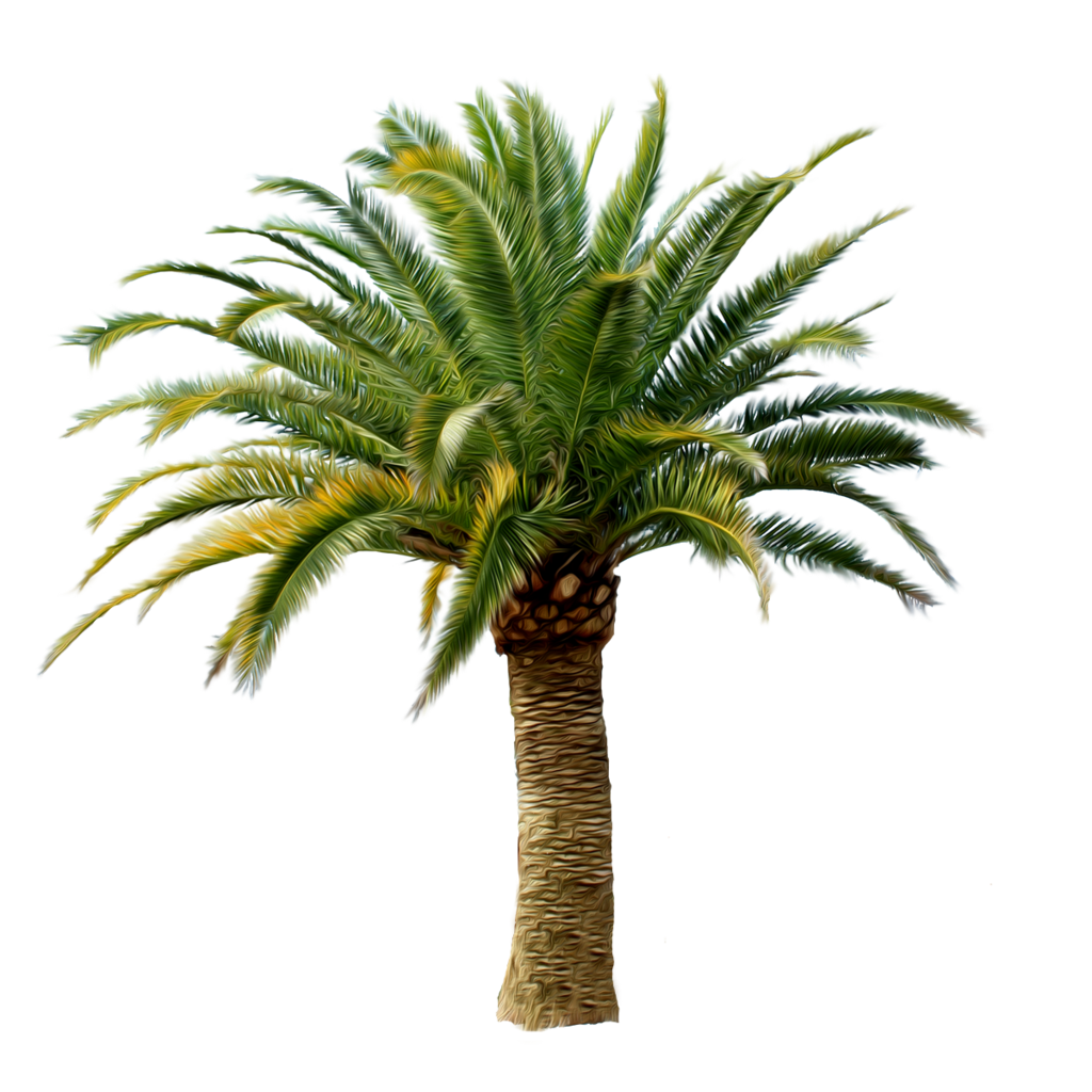 Palm bush png. Tree images download free