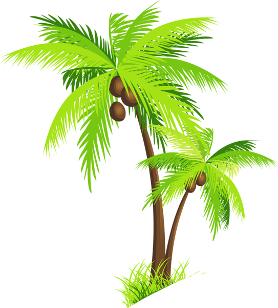 Palm clipart coconut plant. Tree with coconuts png