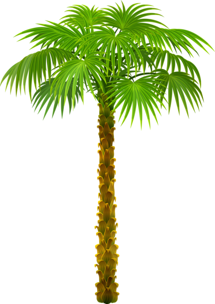 Palm clipart cool. Tree png picture trees