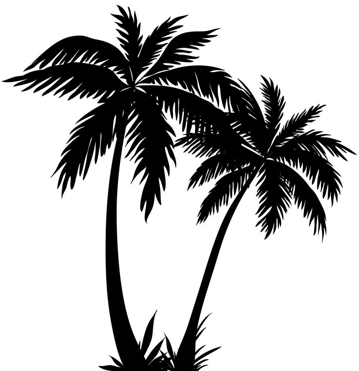 Palm clipart cool. Trees silhouette png clip