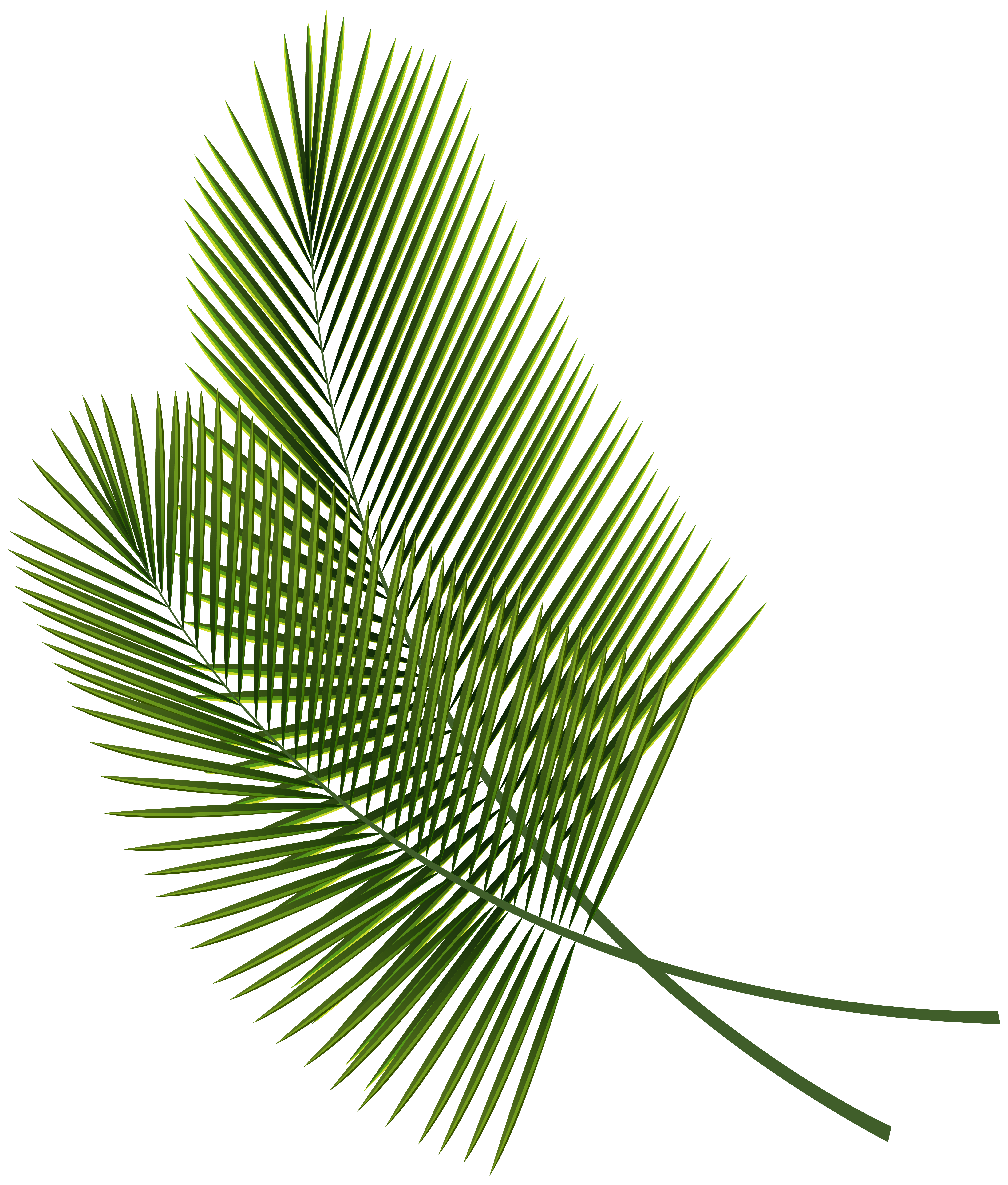 Palm clipart green branch. At getdrawings com free