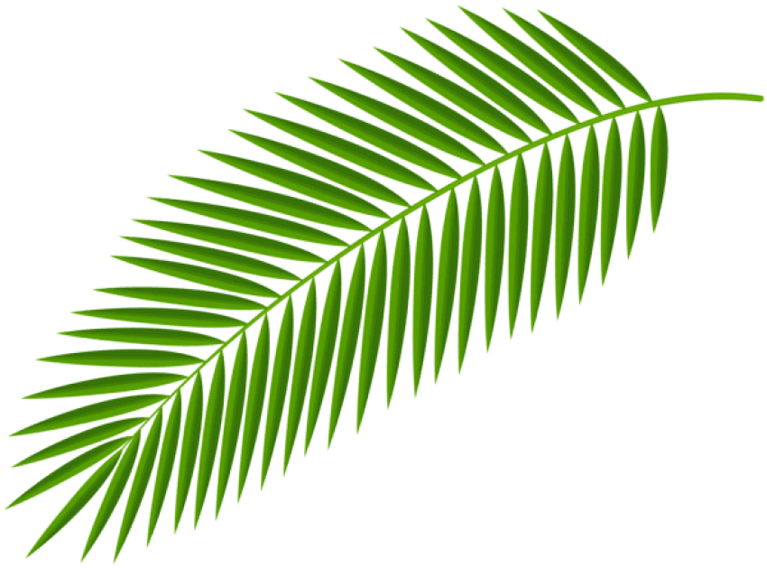 Palm clipart green branch. Download transparent png photo