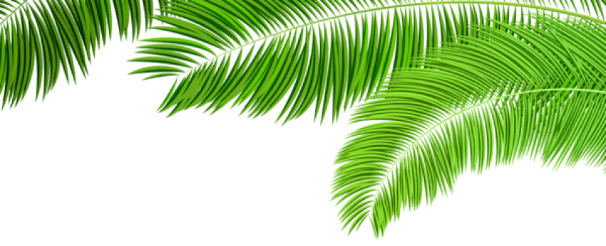 Palm clipart green branch. Download branches decoration png