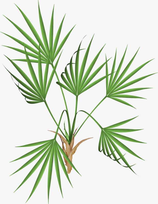 Palm clipart green branch. Banana leaf leaves branches