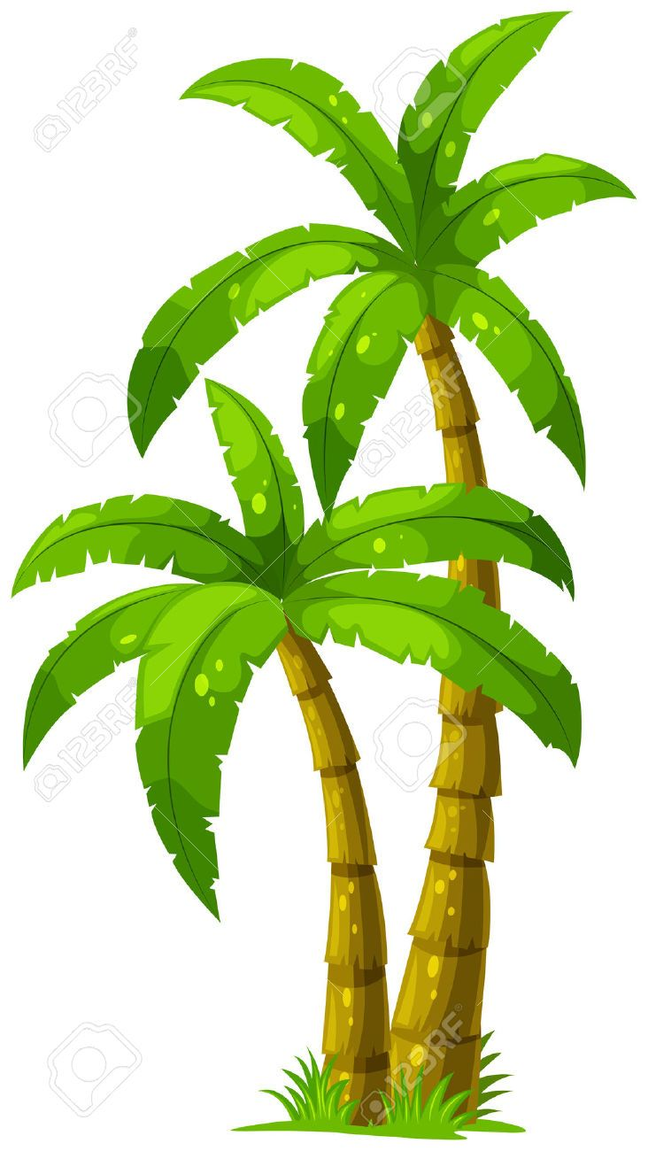Palm clipart jpeg. Illustration of the