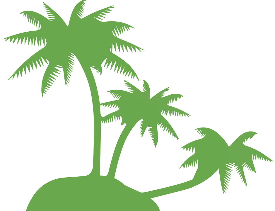 Palm clipart palm leaf. Leaves shop of library