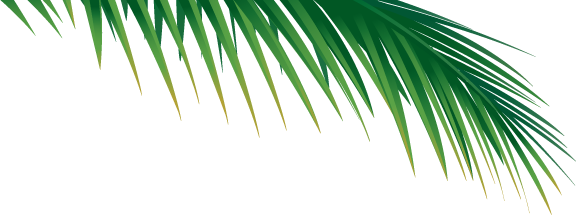 Palm frond png. Vector google search willis