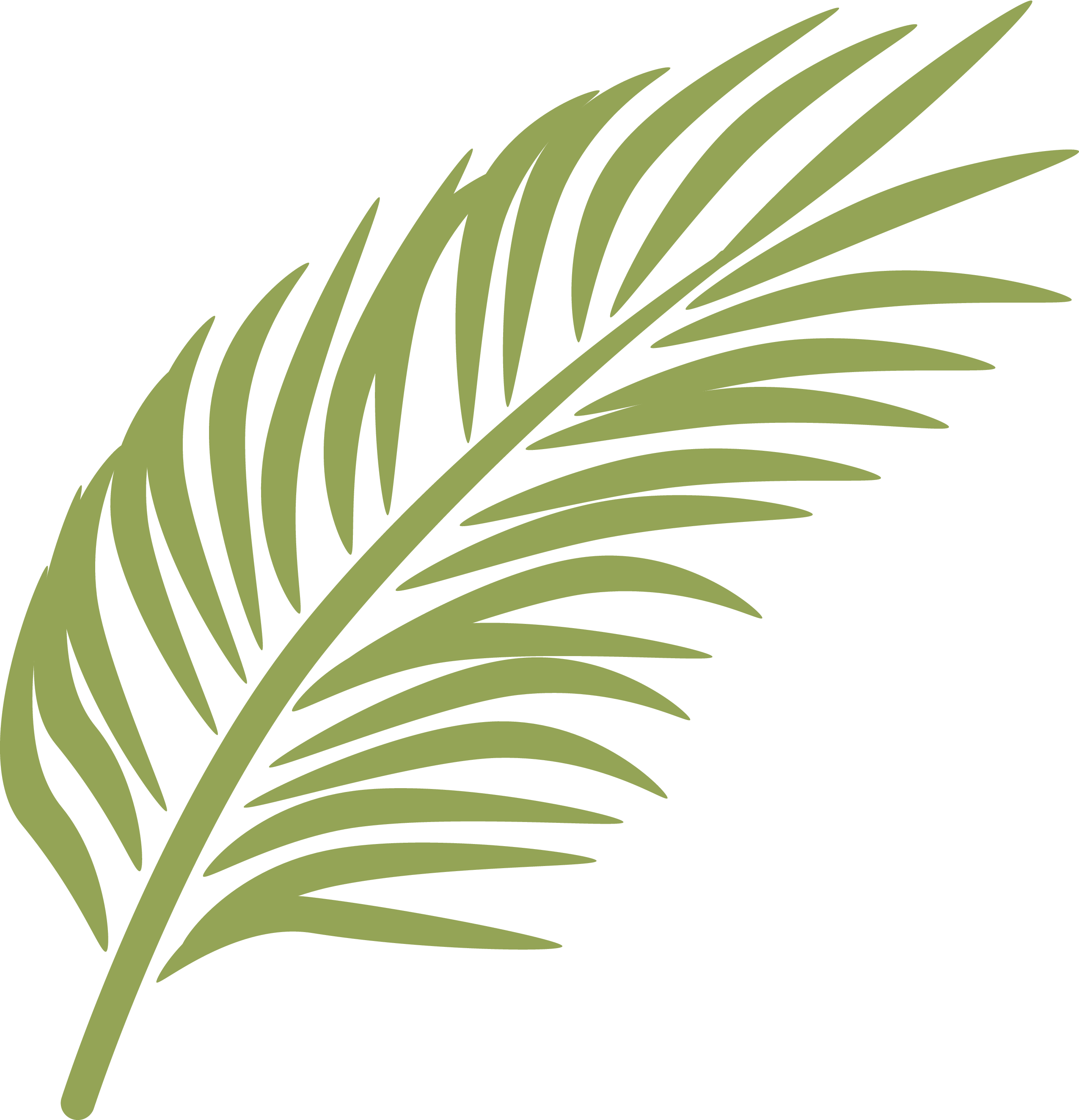 Palm frond png. Branch sunday arecaceae clip
