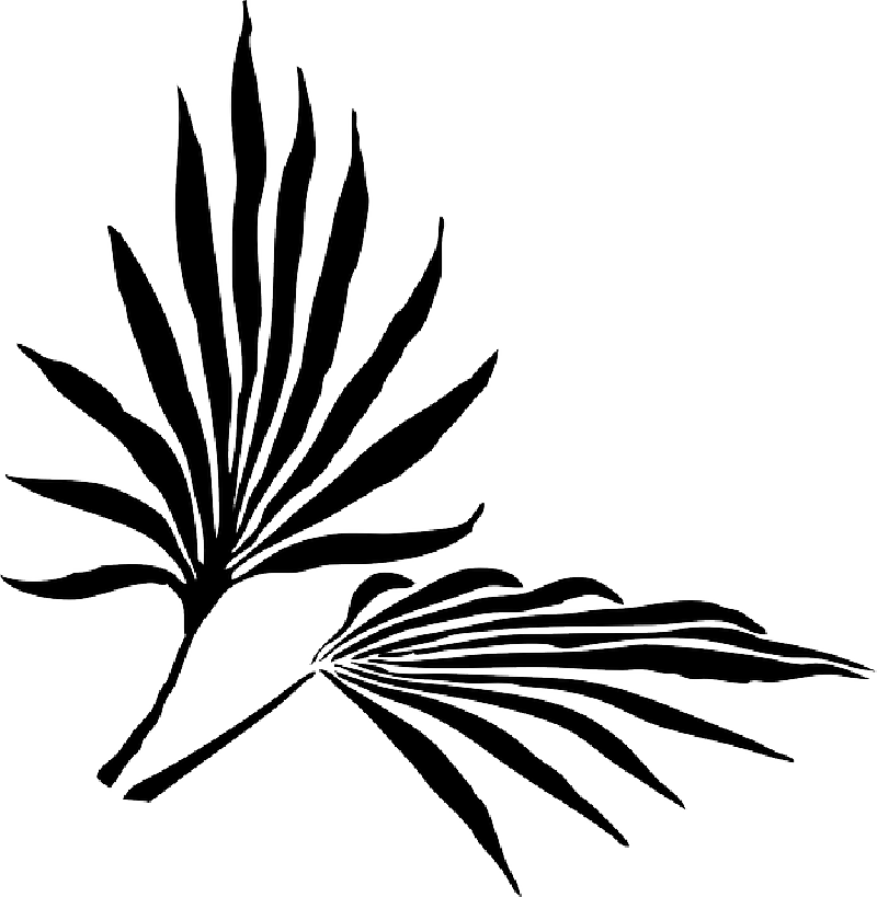 Palm fronds png. Free leaves clipart download