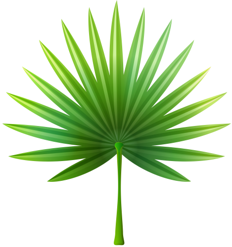 Palm leaf border png. Tropical leaves clipart at