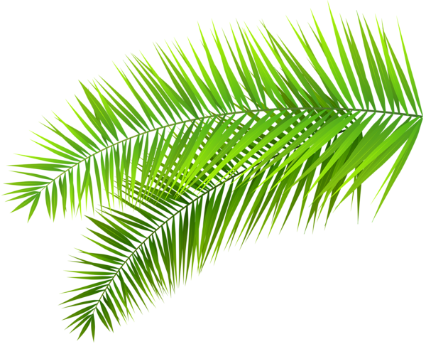 Palm leaf border png. Leaves decoration clip art