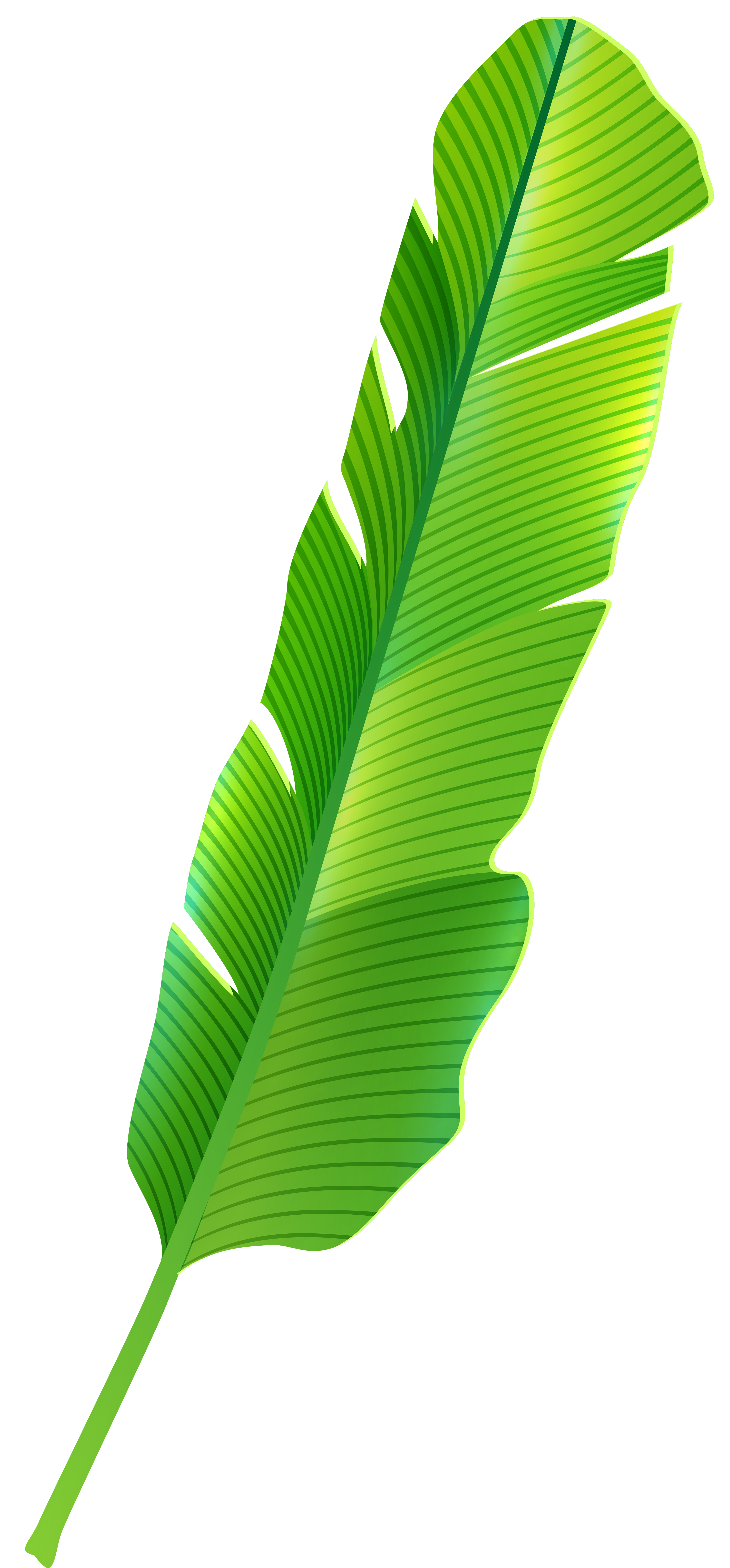 Banana leaves png. Tropical leaf clip art