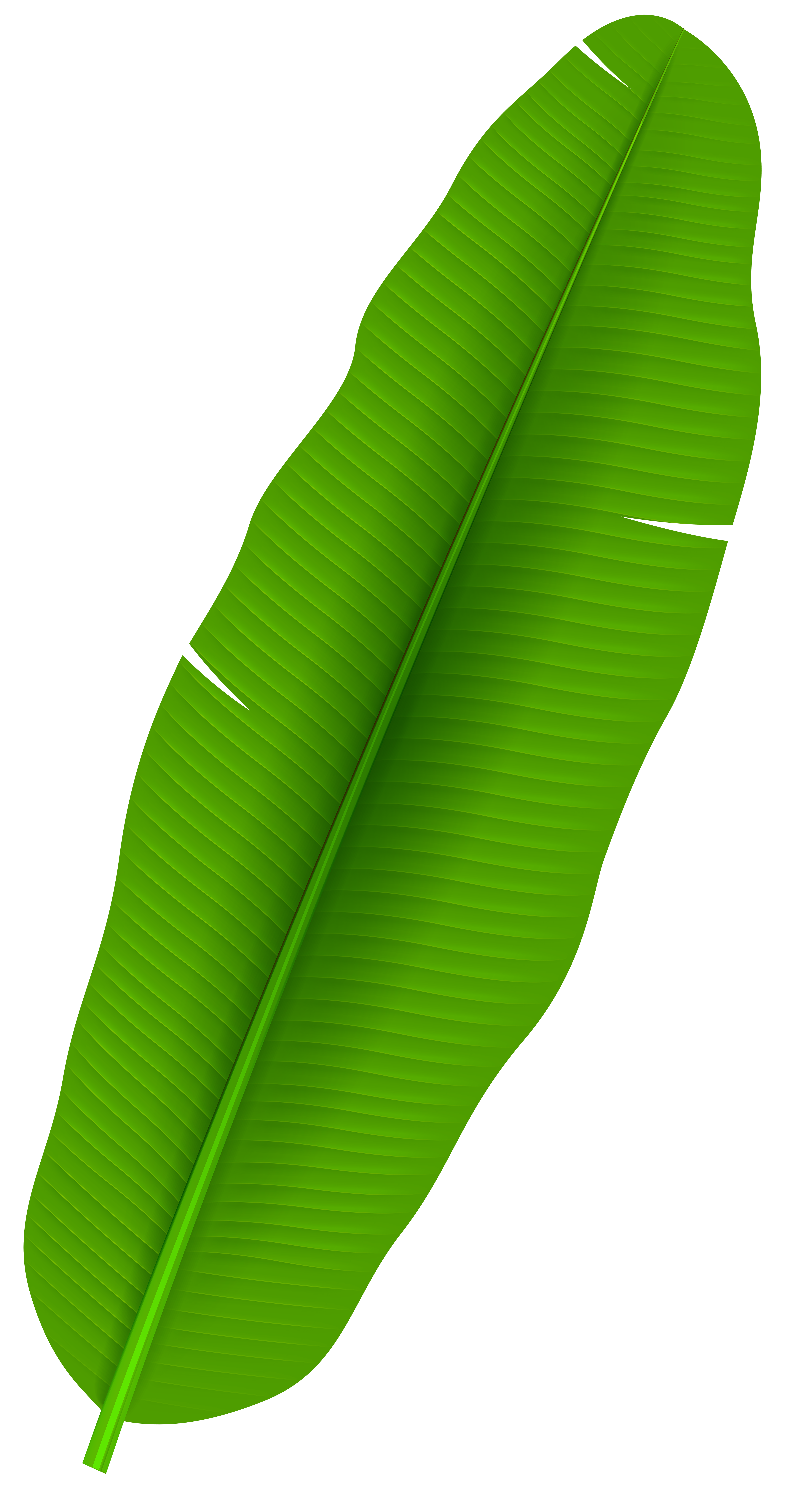 Banana leaves png. Exotic palm leaf transparent