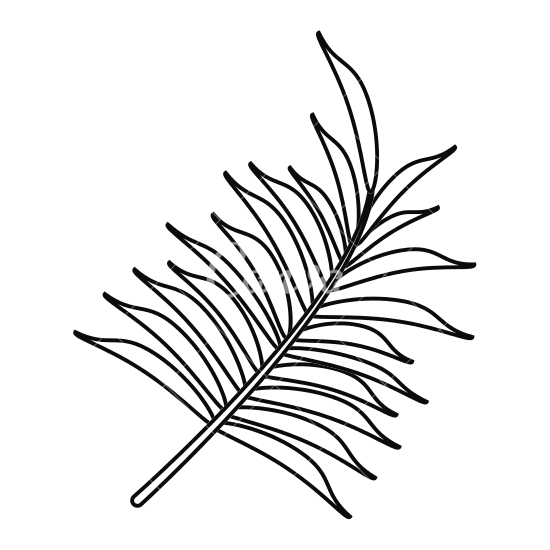 Tropical leaves png transparent in balck. Palm leaf drawing at