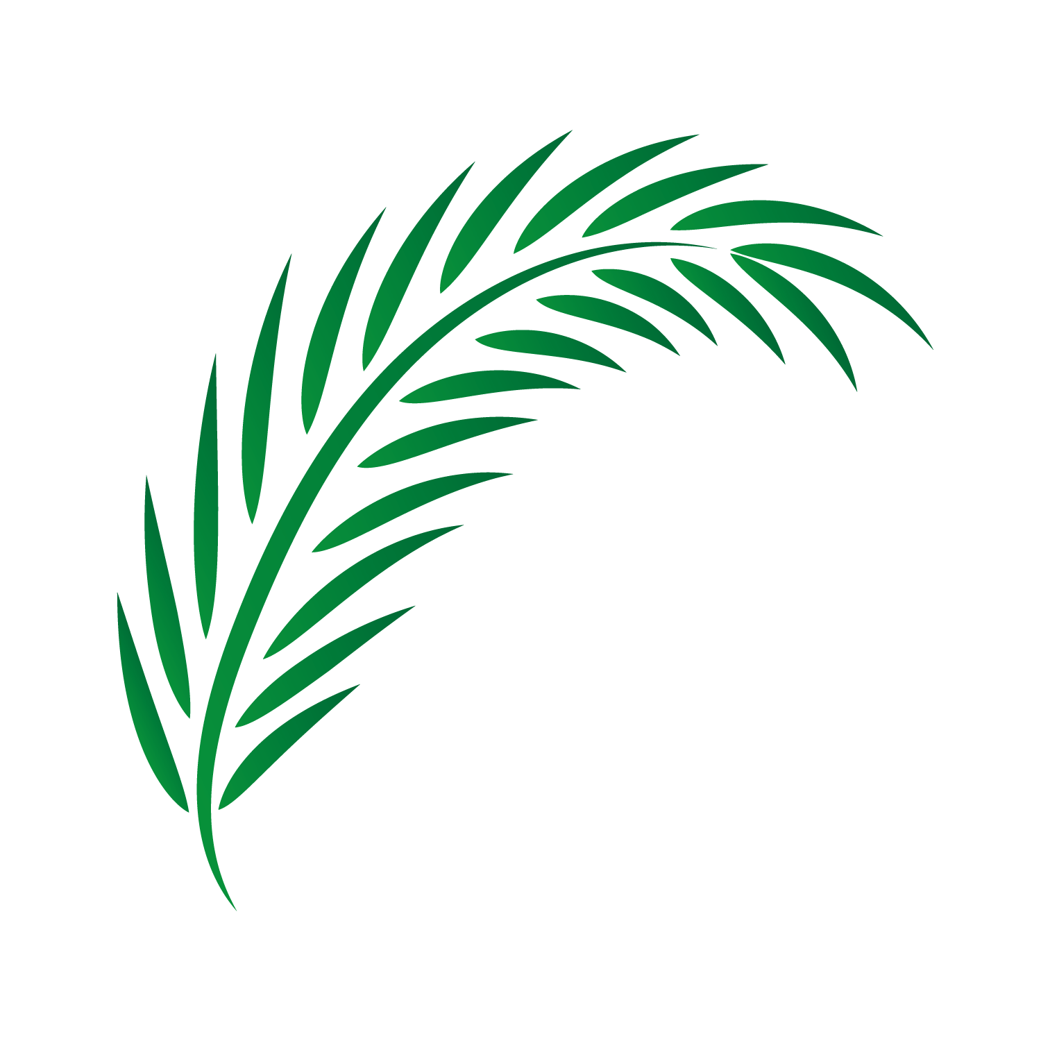 Palm leaf drawing png. Vector leaves transprent free