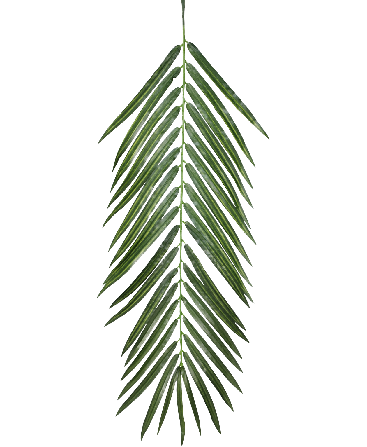 Palm leaf texture png. Plant opacity mapping leaves