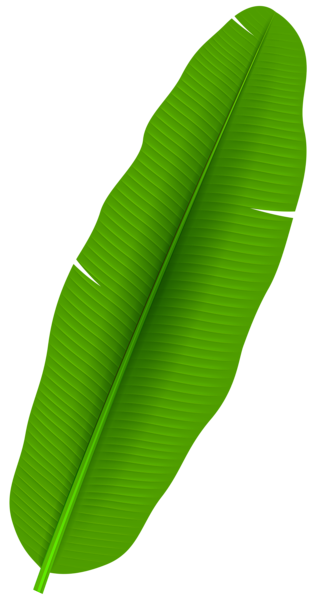 Exotic clip art ron. Palm leaf transparent png jpg black and white