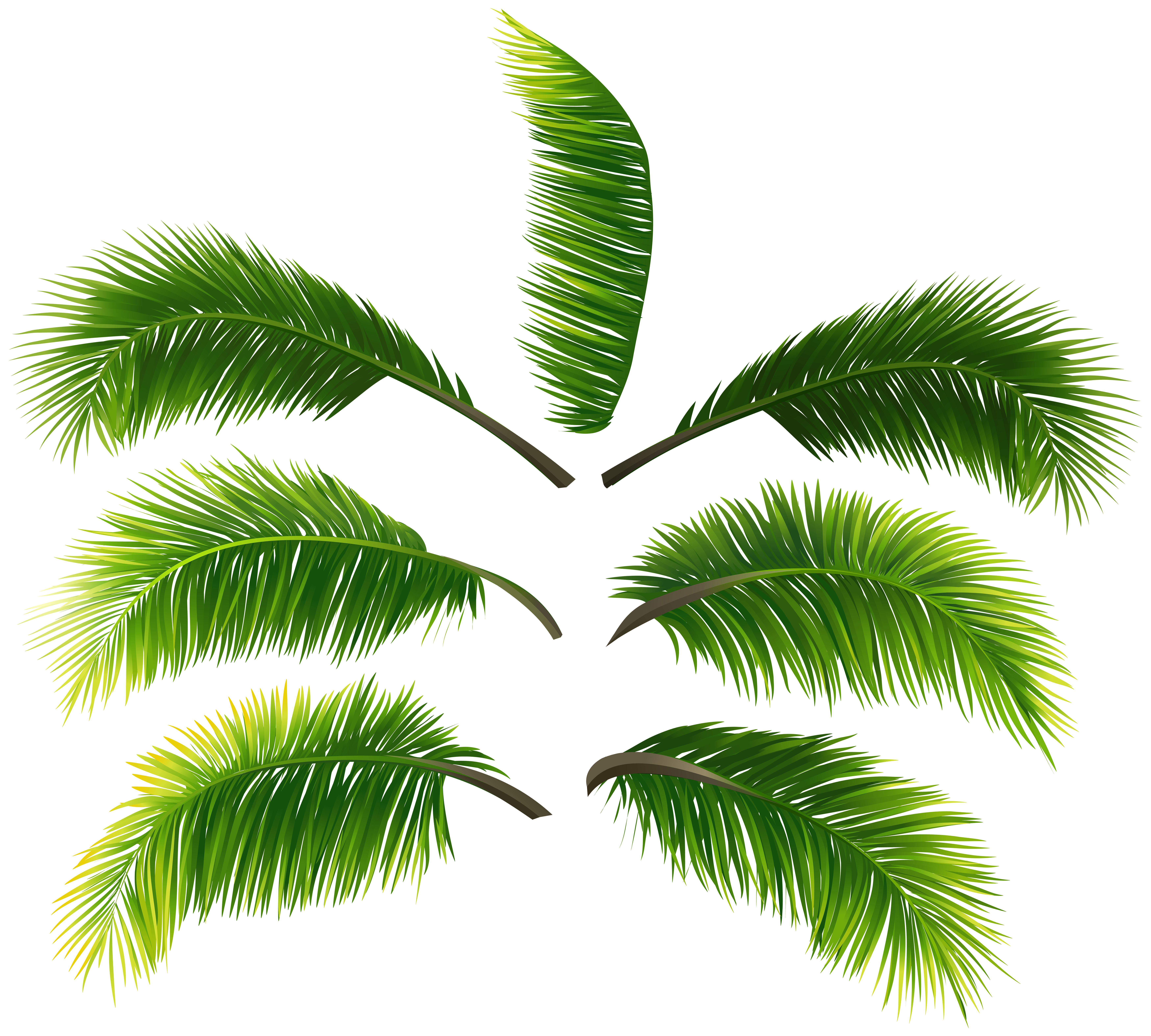 Leaves clip art gallery. Palm leaf transparent png jpg