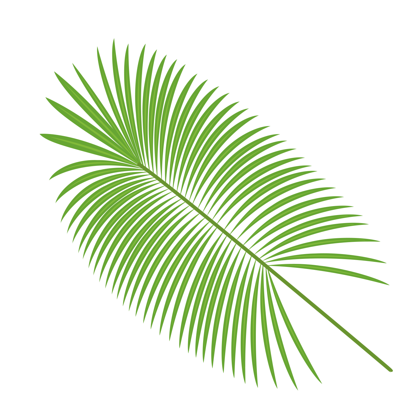 Leave vector palm. Leaves material transprent png