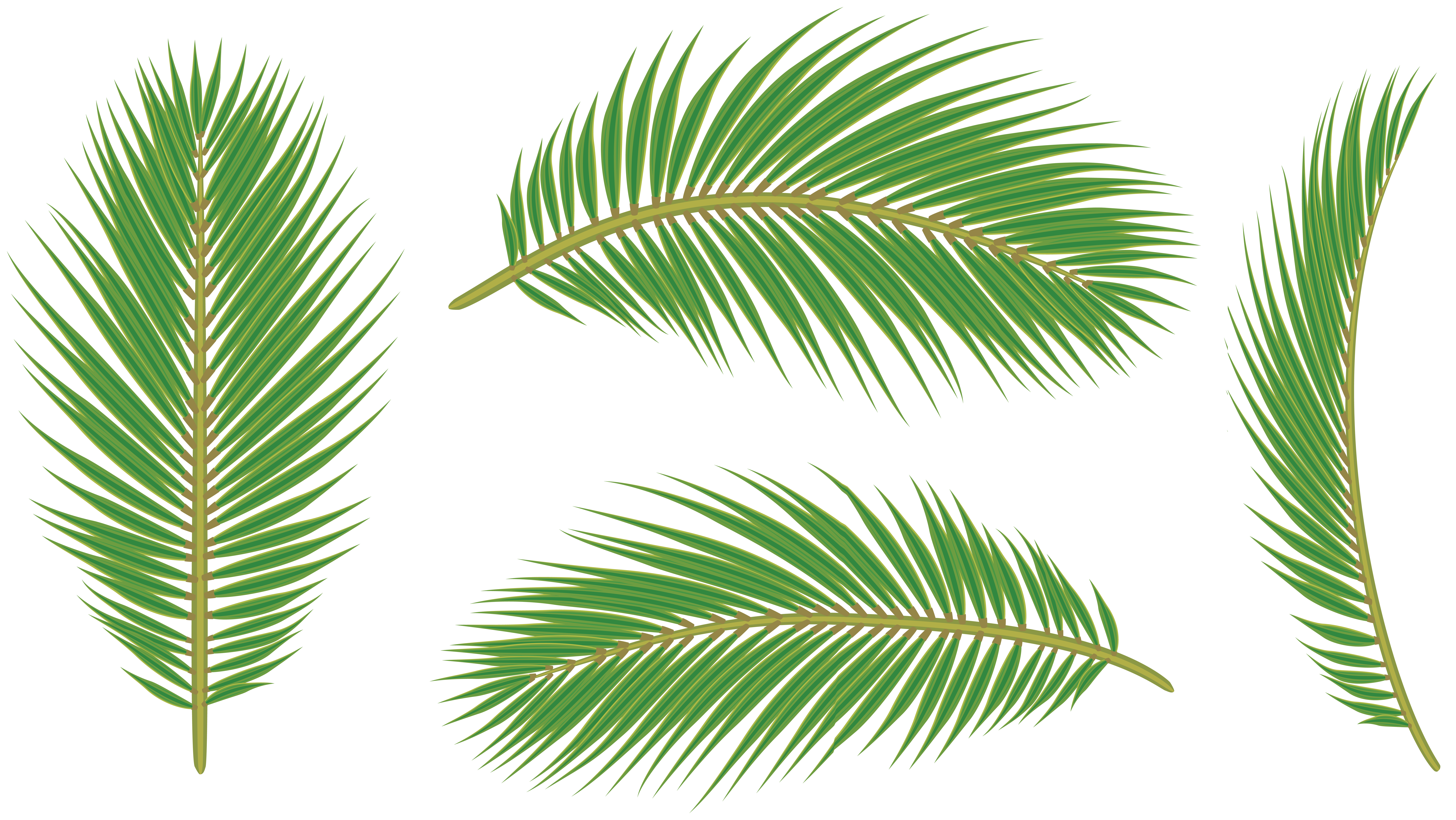 Palm leaves png. Clip art gallery yopriceville