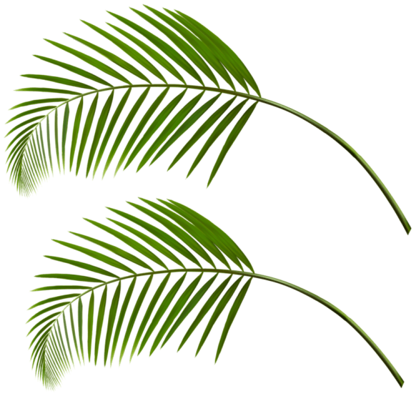Download leaves clipart photo. Palm leaf png transparent vector black and white stock