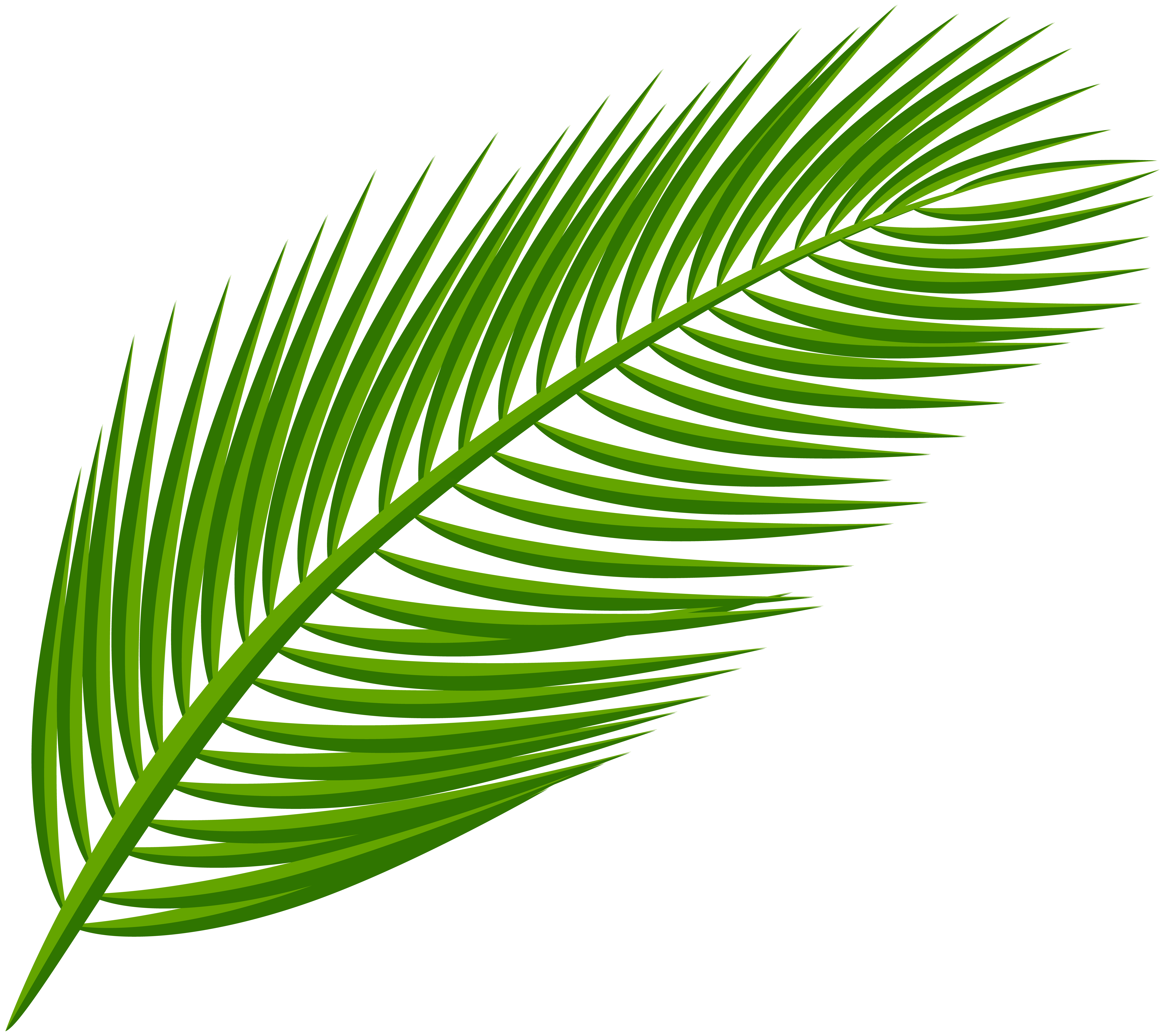 Palm leaves clip art png. Leaf transparent image gallery