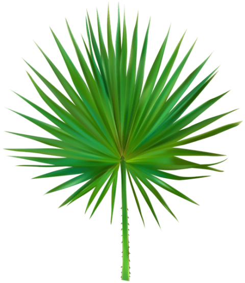 Palm leaves clip art png. Download exotic leaf clipart