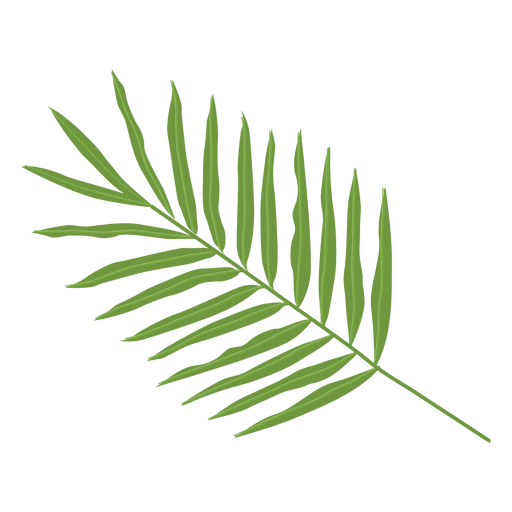 Png palm leaf. Areca illustration transparent svg