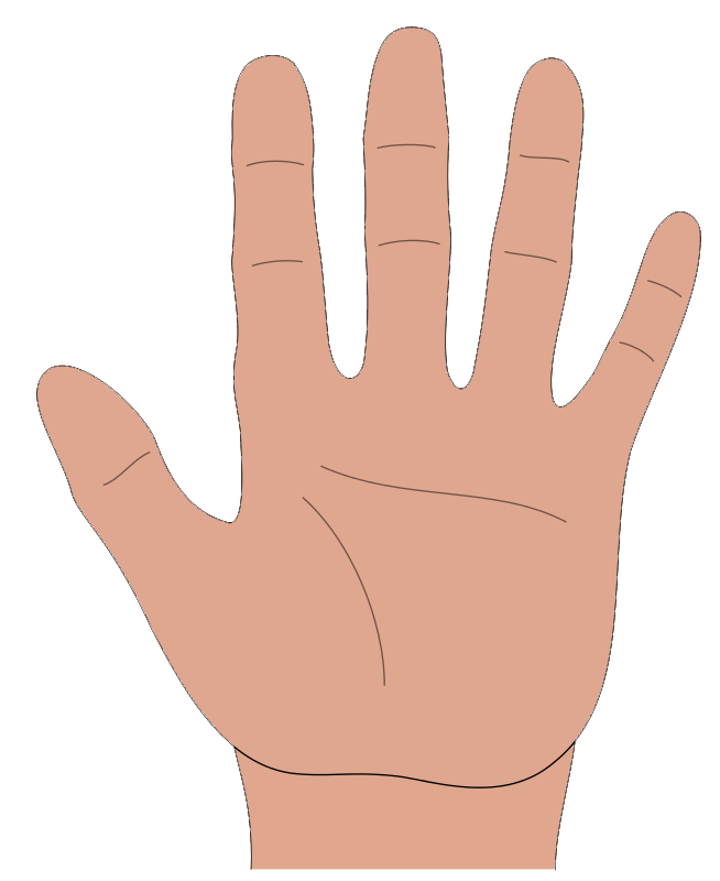 Palm of hand png. Hands hd transparent images