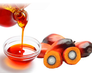 Palm oil png. Natural plant nut extracted
