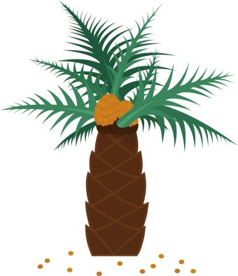 Palm oil png. Download real tree which