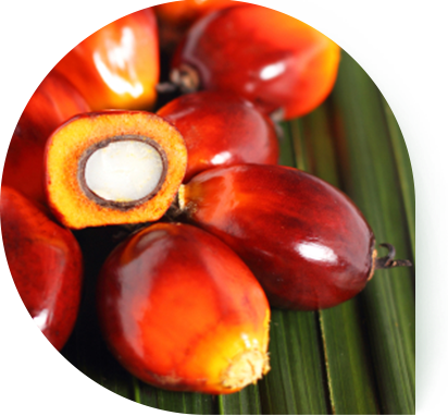 Palm oil png. On emaze is a