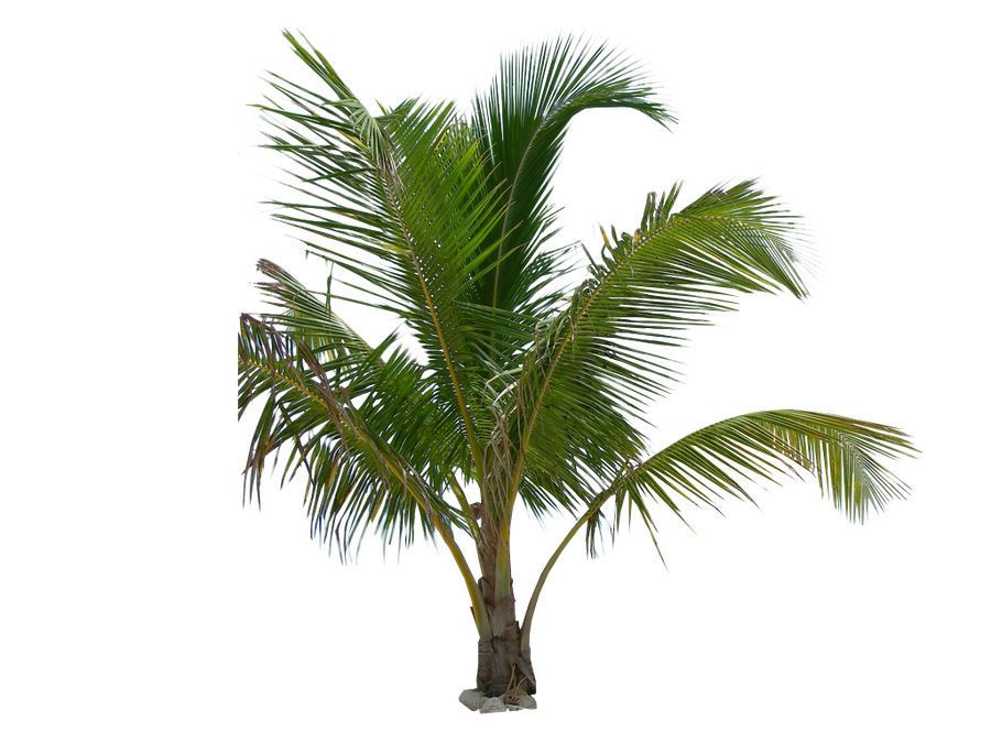 Palm plant png. Tree tube stock iii