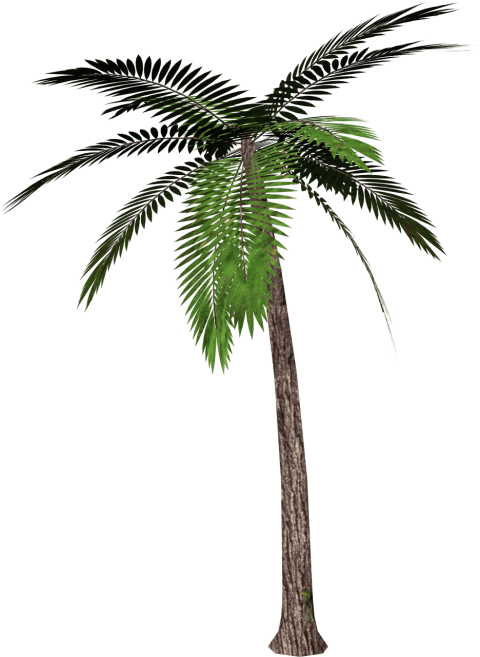 Palm png. Tree free images toppng