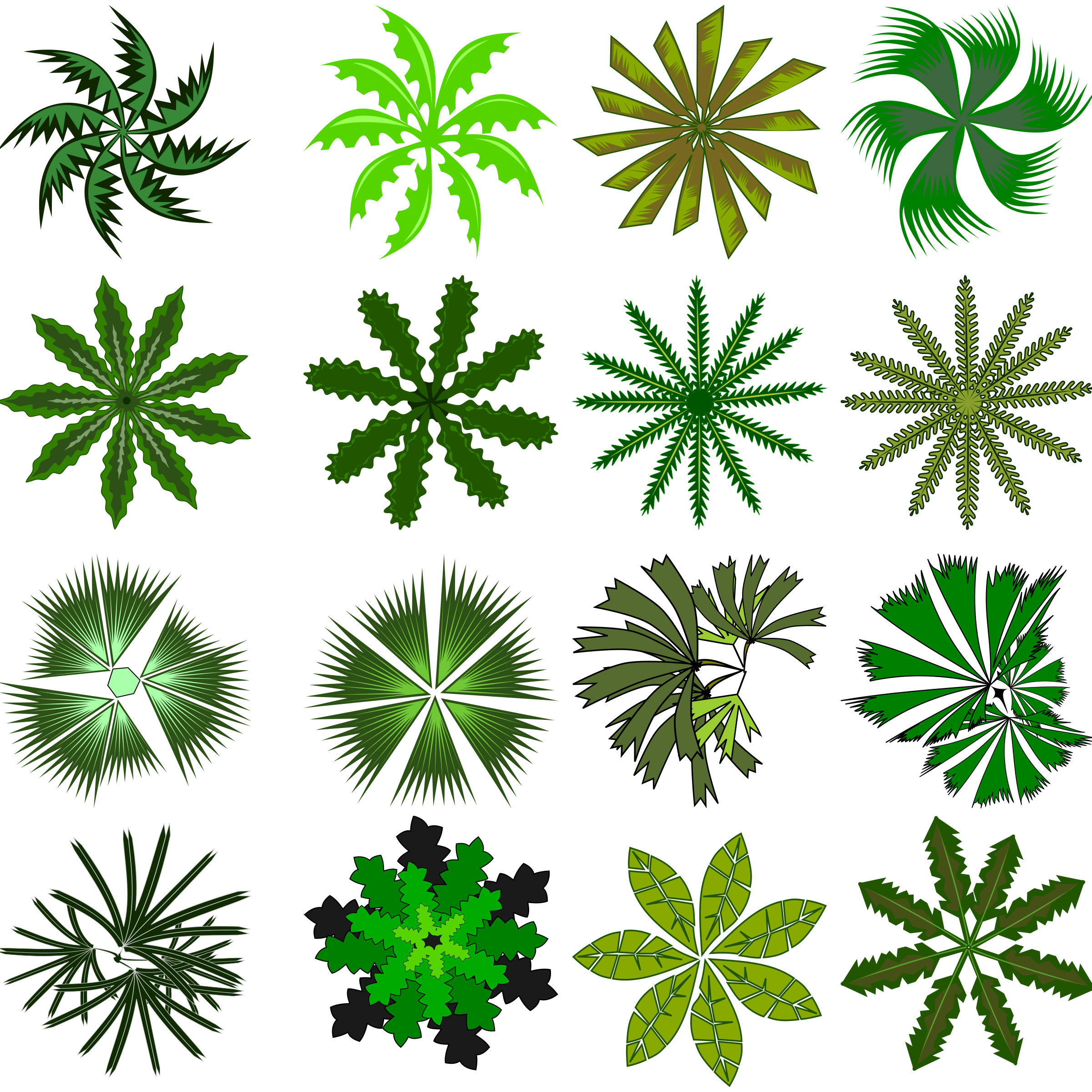 Palm .png. Top view icons png