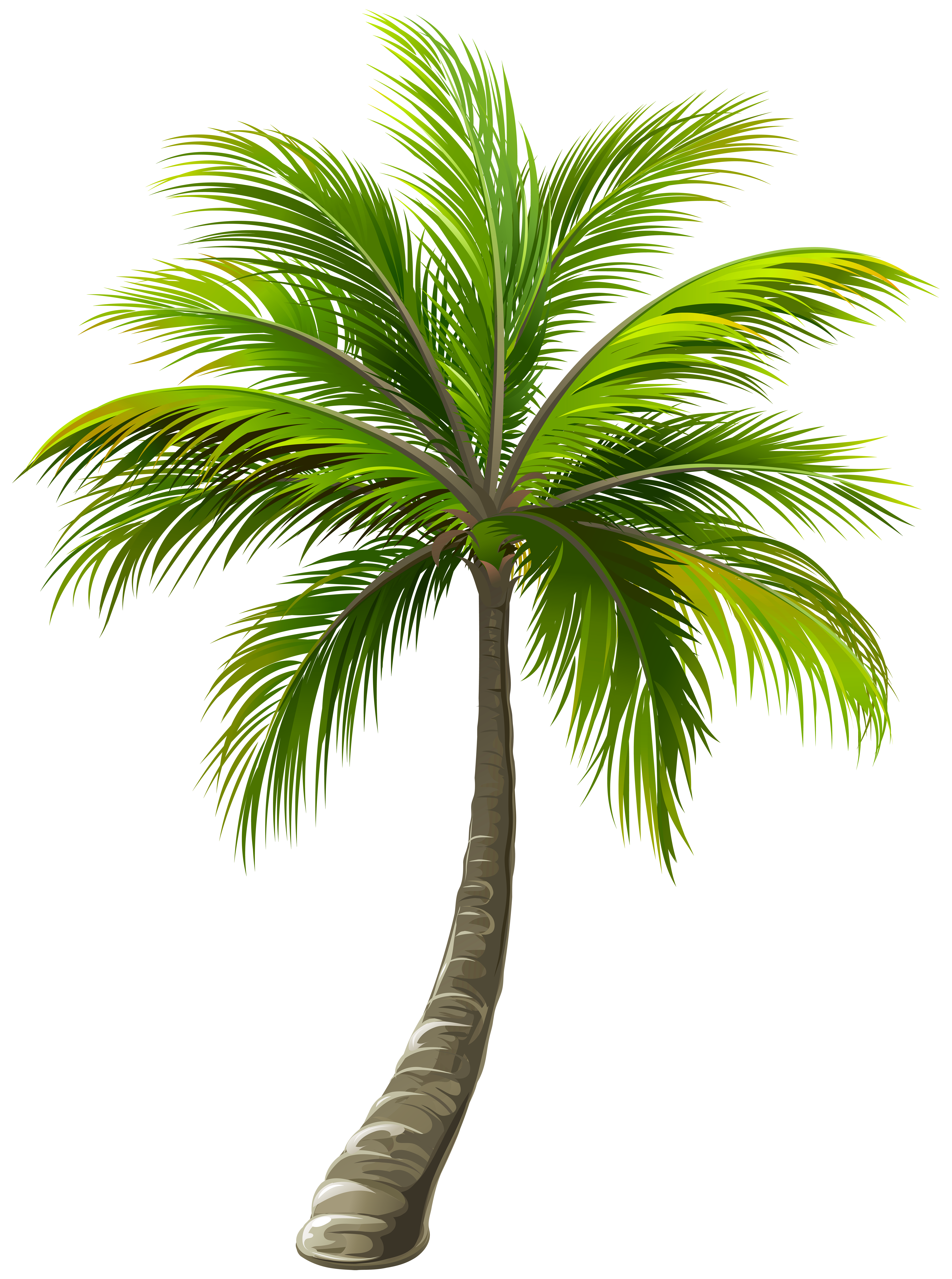 Palm png. Clip art image gallery