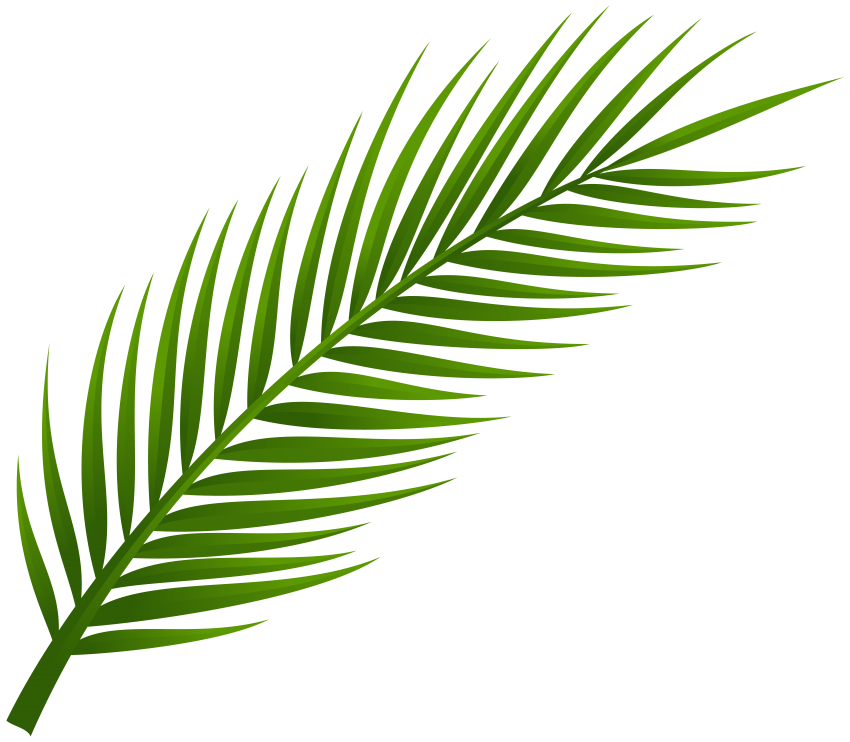 Palm png transparent. Tree leaf free images
