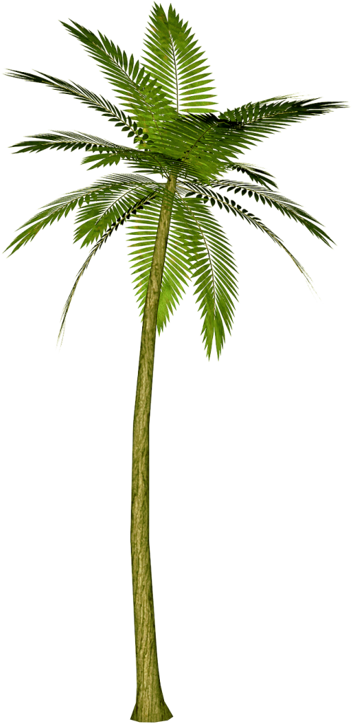 Palm png transparent. Tree web icons