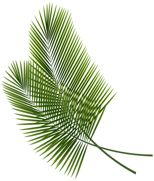 Palm print green plants white background png. Tropical leaves clipart image