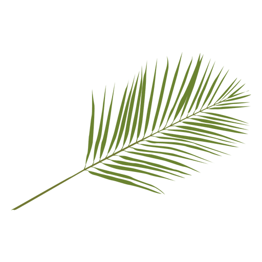 Palm print green plants white background png. Phoenix leaf illustration transparent
