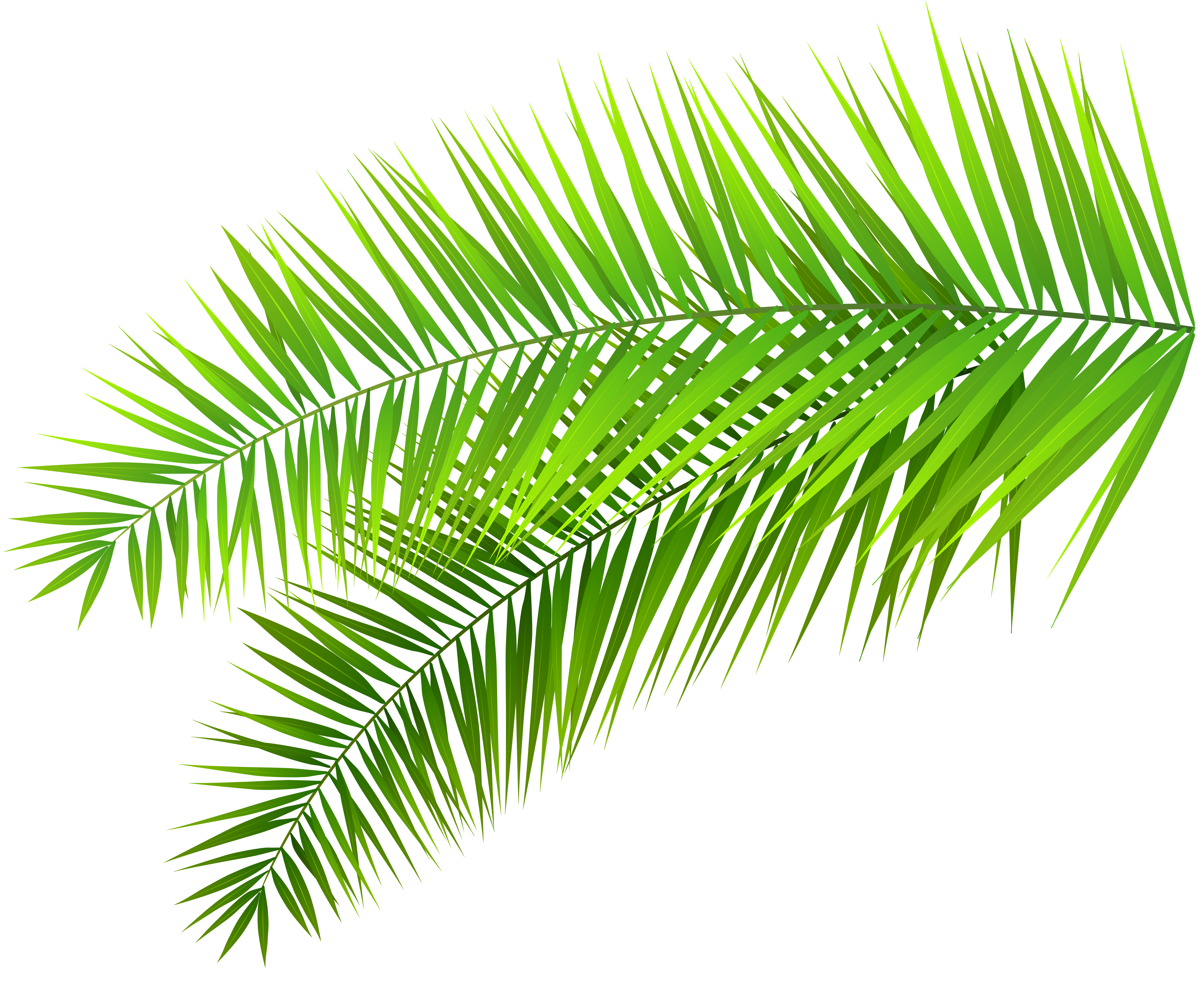Palm Leaves Decoration PNG Clip Art Image