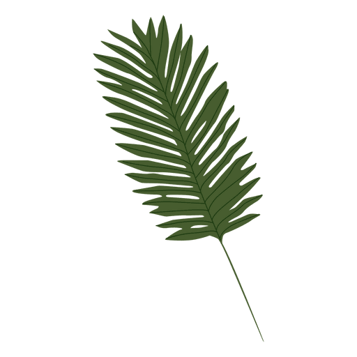 Palm print green plants white background png. Leaf illustration transparent svg