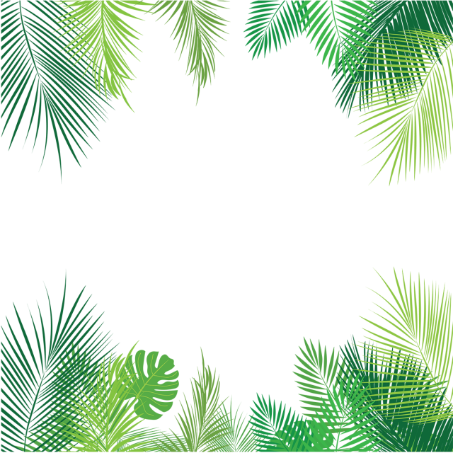 Tropical palm png. Leaves and vector